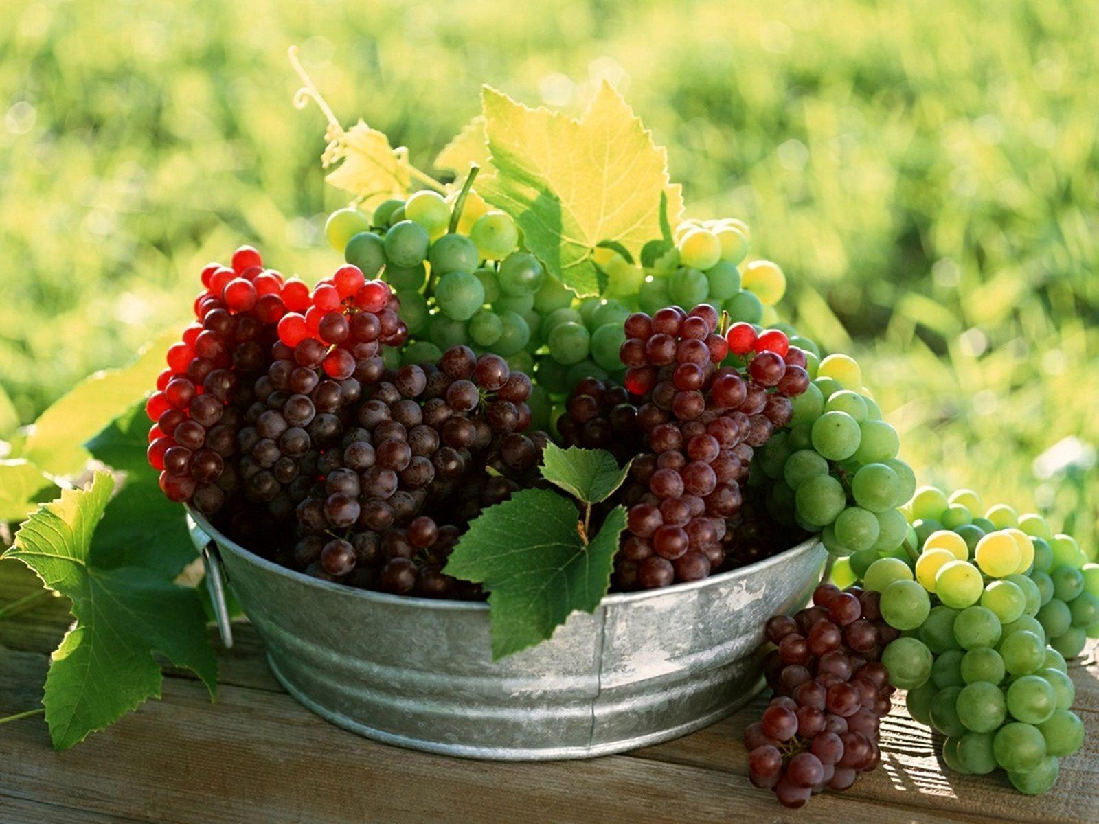 انگور بخورید تا آلزایمر نگیرید
