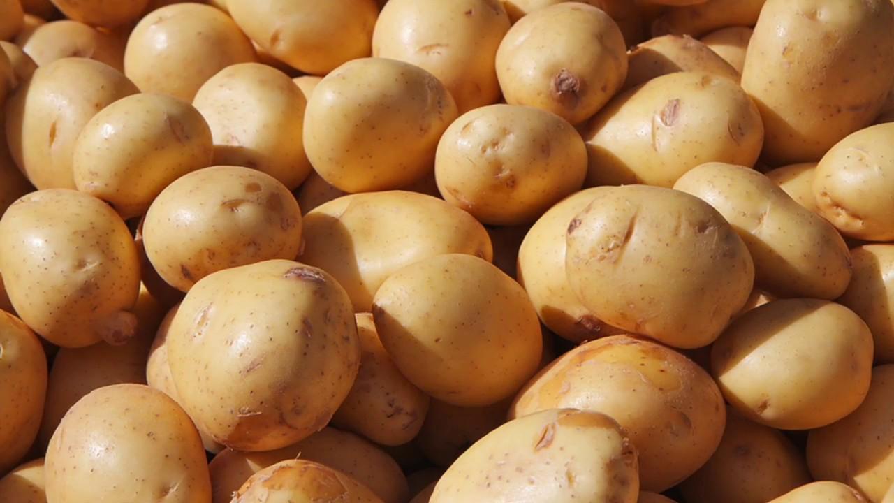 سیبزمینی و این همه خاصیت شگفت انگیز