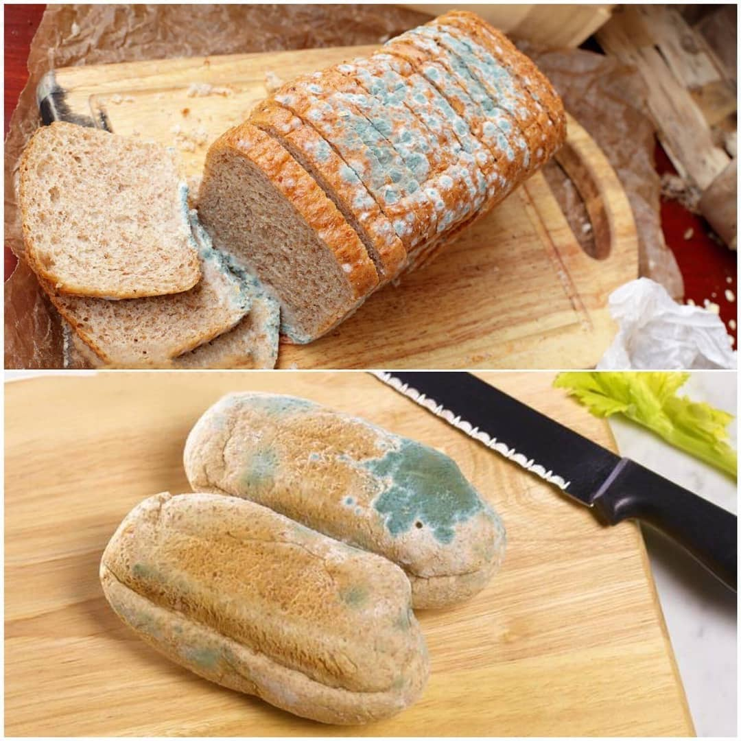 نان خشک کپکزده جایگزین ادویه در بازار